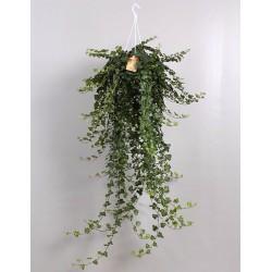 IVY-HEDERA WONDER - plant generic