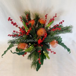 CHRISTMAS CORDIFOLIUM EXOTIC-deck from € ?? a ??