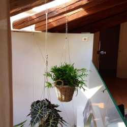 PLANTS SUSPENDED