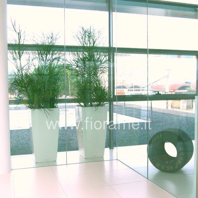 MANAGEMENT ENTRANCE WITH POTTED CUBIC