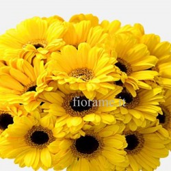 GERBERAS YELLOW IN NUMBER
