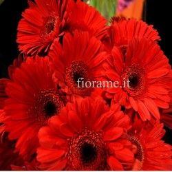 GERBERAS RED IN NUMBER