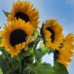SUNFLOWER - the meaning