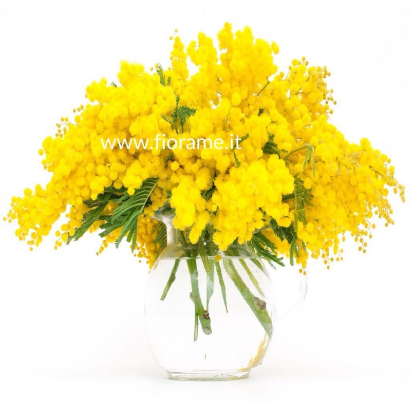 - MIMOSA YELLOW-bouquet-from € 14 to 44