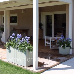 PORCH, TASTE the MEDITERRANEAN - plumbago
