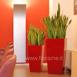 MEETING ROOM, VASES in VIBRANT - robust plants
