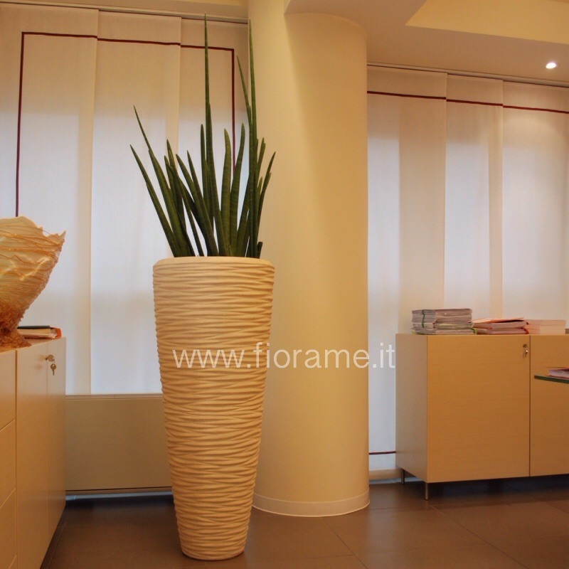 OFFICE, VASE CONICAL, AND THE PLANT IS CALLED THE CYLINDRICAL