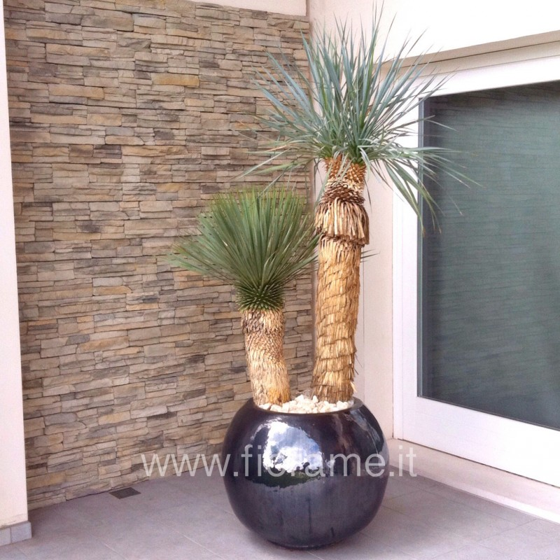 PRIVATE ENTRANCE, TASTE the LATIN - yucca